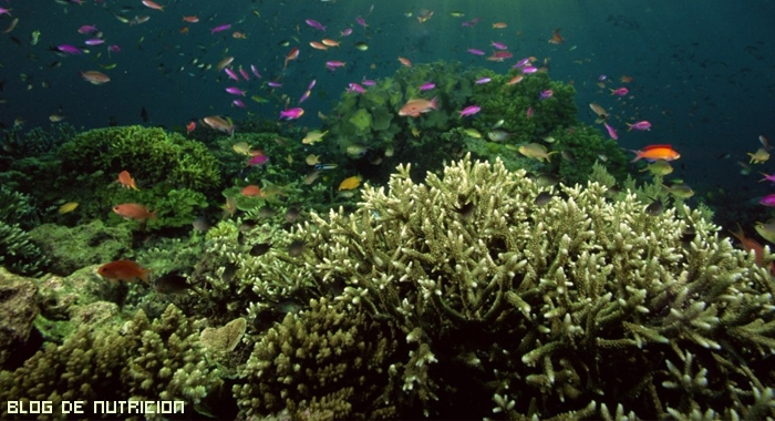 algas marinas para degustar