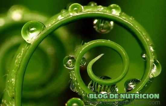 la clorofila de las plantas